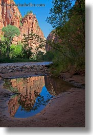 america, mountains, north america, reflections, united states, utah, vertical, virgin river, western usa, zion, photograph