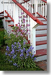 flowers, orcas island, red, stairs, washington, united states, photograph