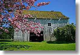 orcas island, pink, tree, barn, washington, united states, photograph