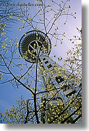 america, branches, buildings, nature, north america, pacific northwest, perspective, plants, seattle, space needle, structures, towers, trees, united states, upview, vertical, washington, western usa, photograph