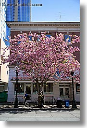 america, buildings, nature, north america, pacific northwest, pink, plants, seattle, trees, united states, vertical, washington, western usa, photograph