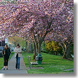 america, nature, north america, pacific northwest, pedestrians, people, pink, plants, seattle, square format, trees, united states, walking, washington, western usa, womens, photograph