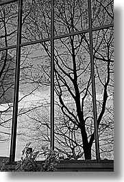 america, black and white, branches, buildings, nature, north america, pacific northwest, plants, reflections, seattle, trees, united states, vertical, washington, western usa, photograph
