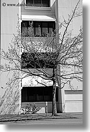america, black and white, buildings, nature, north america, pacific northwest, plants, seattle, trees, united states, vertical, washington, western usa, photograph