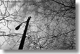 america, black and white, branches, horizontal, lamp posts, nature, north america, pacific northwest, plants, seattle, trees, united states, washington, western usa, photograph