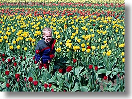 america, boys, childrens, flowers, horizontal, nature, north america, pacific northwest, people, tulips, united states, washington, western usa, photograph