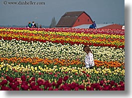 america, barn, buildings, childrens, colored, flowers, girls, horizontal, multi, nature, north america, pacific northwest, people, structures, tulips, united states, washington, western usa, photograph