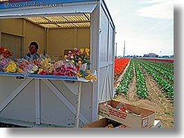 america, booths, flowers, horizontal, nature, north america, pacific northwest, people, tulips, united states, vendors, washington, western usa, photograph