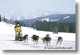 america, dog sled, dogs, horizontal, jackson hole, mush, north america, snow, united states, winter, wyoming, photograph