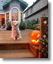 dogs, goul, halloween, homes, long exposure, personal, pumpkins, vertical, photograph