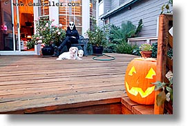 dogs, goul, halloween, homes, horizontal, long exposure, personal, pumpkins, photograph