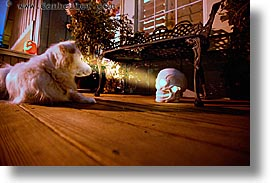 dogs, halloween, homes, horizontal, personal, skulls, slow exposure, photograph