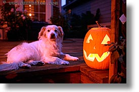 dogs, halloween, homes, horizontal, personal, pumpkins, slow exposure, photograph