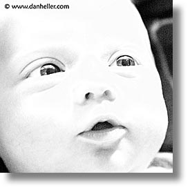 babies, baby face, black and white, boys, faces, infant, jacks, square format, photograph