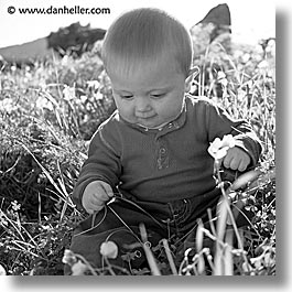 babies, black and white, boys, grass, infant, jacks, jan feb, square format, photograph